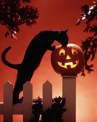 Puss Photograph - 1980s Jack-o-lantern & Black Cat by Vintage Images