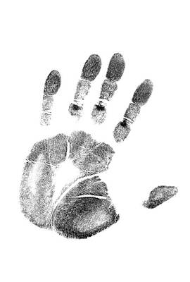 Fingerprint Photograph - 1980s Left Hand Palm Print On White by Vintage Images
