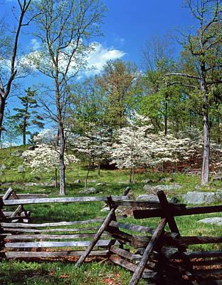 1980s Spring Scenic Dogwood Blossoms Art Print