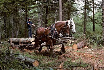 Draft Horses Photograph - 1980s Young Man Logging With Team by Vintage Images