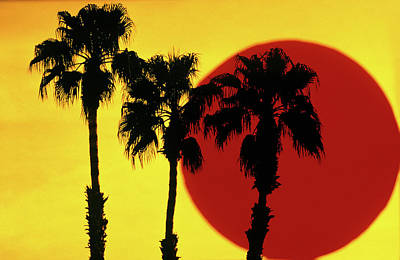 Big 3 Painting - 1990s 3 Silhouetted Palm Trees by Vintage Images