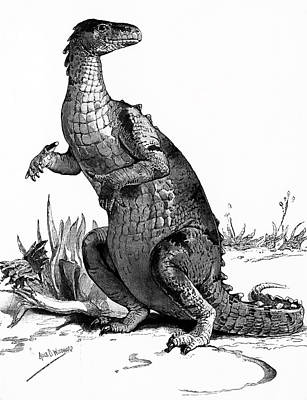1990s Engraving Of Dinosaur Iguanodon Art Print