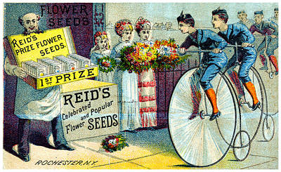 Painting - 19th C. Reid's Flower Seeds by Historic Image