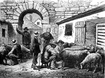 19th Century Sheep Farming Art Print