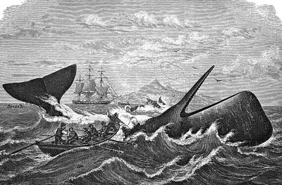 19th Century Whale Hunt Art Print