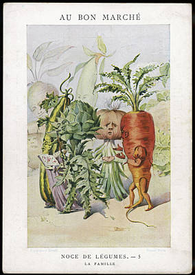 Artichoke Drawing -  The Vegetable Wedding No by Mary Evans Picture Library
