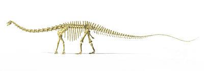 Animals Digital Art - 3d Rendering Of A Diplodocus Dinosaur by Leonello Calvetti