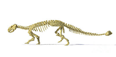 3d Rendering Of An Ankylosaurus Art Print by Leonello Calvetti