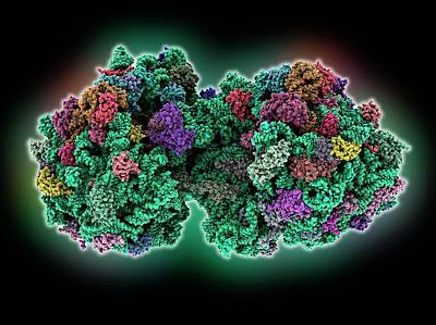 Molecular Photograph - 70s Ribosome by Laguna Design
