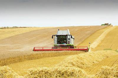 Combine Harvester Photograph - A Farmer Harvesting Wheat by Ashley Cooper