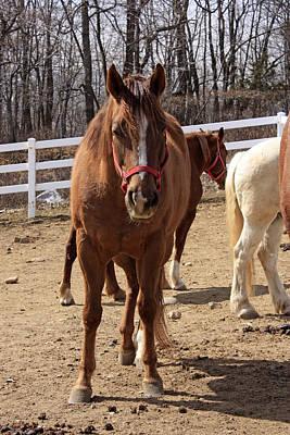 Pasta Al Dente - A Horse at the Saddle Ridge Riding Center by James Connor