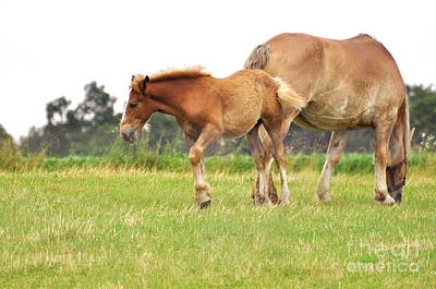 A Mare And Her Colt Art Print by Penny Neimiller