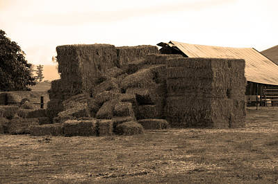 Cattle Chute Photograph - A Needle In A Haystack by Barbara Snyder