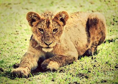 Cat Photograph - A Small Lion Cub Portrait. Tanzania by Michal Bednarek