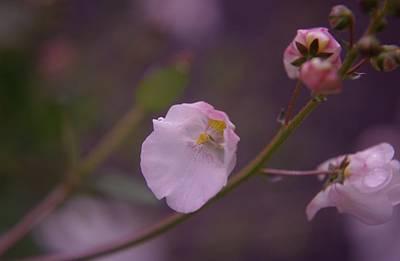 A Soft Flower Art Print