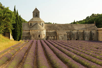 Photograph - Abbaye De Senanque by Dan Herrick