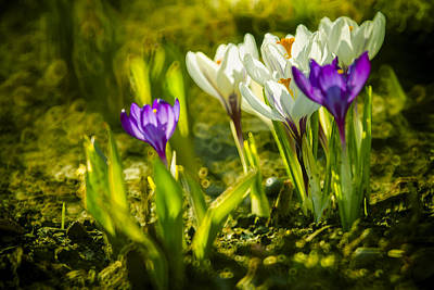 Abstract Crocus Background Art Print by Jaroslaw Grudzinski