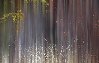 Abstract Trees With Motion Blur Art Print by Ron Harris