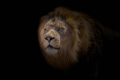 Art Print featuring the photograph African Lion by Peter Lakomy
