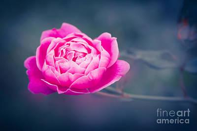 Rosaceae Photograph - Akala Pua Nani O Wailua by Sharon Mau