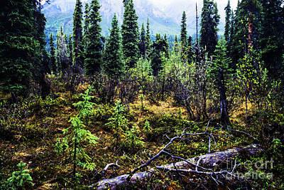 Land Of The Midnight Sun Photograph - Alaska Mountain Range Wilderness by Thomas R Fletcher