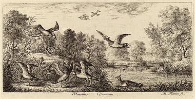 Lapwing Drawing - Albert Flamen Flemish by Quint Lox