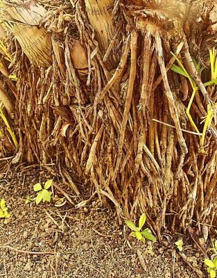 Aligned Roots Original