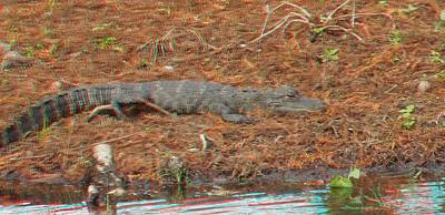 Photograph - Alligator At Green Cay by Ron Davidson