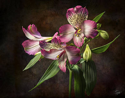 Photograph - Alstroemeria 2 by Endre Balogh