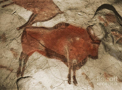 Photograph - Altamira Cave Paintings by Photo Researchers