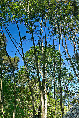 Reflecting Ponds Photograph - Alternate Reality - Reflected View Of The Forest From A Pond In Garland Ranch Park In Carmel Valley. by Jamie Pham