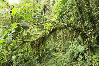 Epiphytic Photograph - Amazonian Cloud Forest by Dr Morley Read