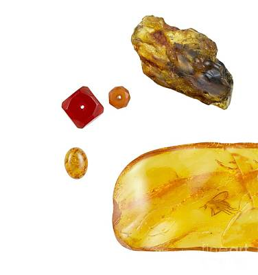 Opaque White Photograph - Amber by Paul Biddle