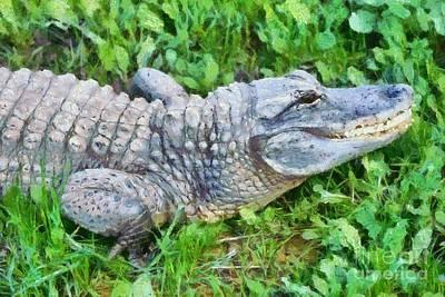Alligator Painting - American Alligator by George Atsametakis