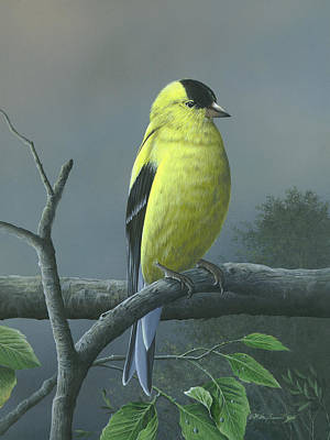 Painting - American Goldfinch by Mike Brown