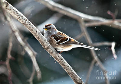 Winter Scene. Winter Landscape. Snow Landscape. Black And White. Birds Photograph - American Tree Sparrow by Cheryl Baxter