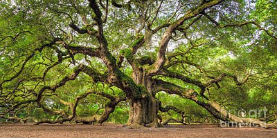 Huge Photograph - Angel Oak Tree Of Life by Dustin K Ryan