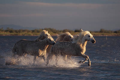 Running Horses Photograph - Angels Of Camargue by Rostovskiy Anton
