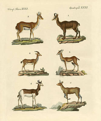 Antelope Drawing - Antelopes And Gazelles by Splendid Art Prints