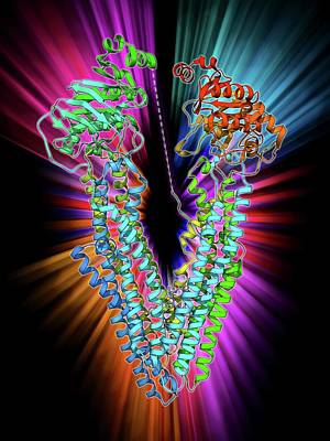 Molecular Structure Photograph - Antibodies And Their Antigen by Laguna Design