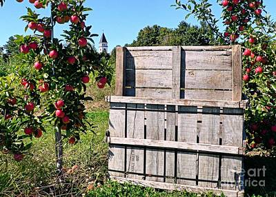 Photograph - Apple Picking by Janice Drew