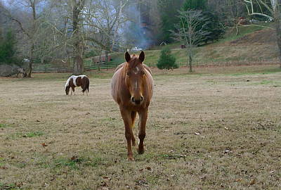 Photograph - Approaching Horse by Denise Mazzocco