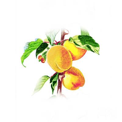 Painting - Apricots by Irina Sztukowski