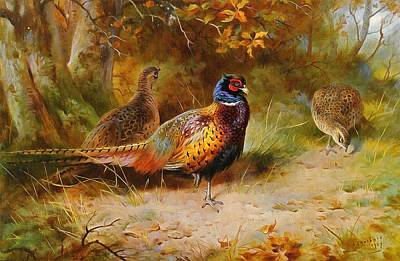 Covert Painting - Autumn Covert Pheasants by Archibald Thorburn