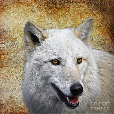 Arctic White Wolf  Art Print by Steve McKinzie