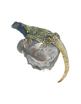 Painting - Argentine Lizard by Cindy Hitchcock