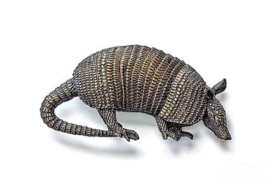 Photograph - Armadillo by Walt Foegelle