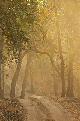 Mcdonalds Photograph - Asia, India, Bandhavgarh National Park by Joe and Mary Ann Mcdonald