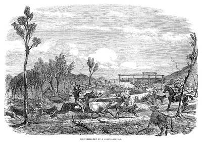 Cattle Roundup Painting - Australia Queensland, 1863 by Granger