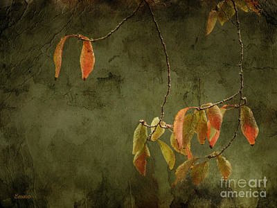 Photograph - Autumn Colours by Eena Bo